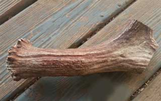 Photo of a Moose Antler Base for making a knapping billet.