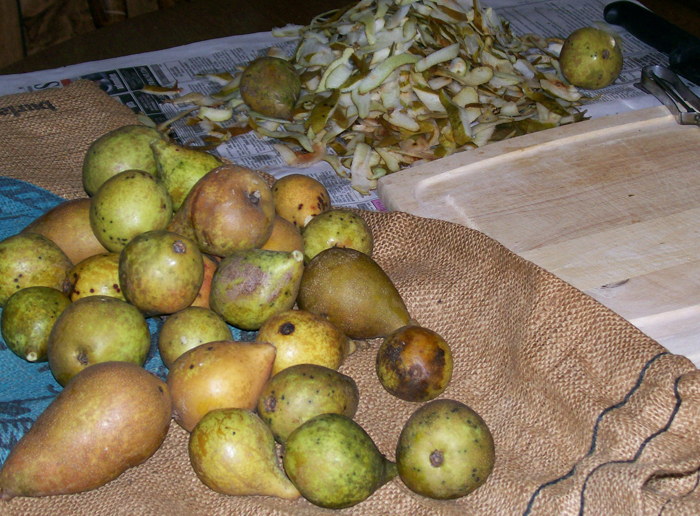photo of approximately two dozen wild pears ready for washing and peeling